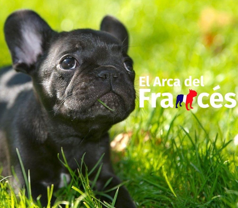El Arca del Frances